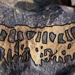 Rock Art Astronomy news. Venus Calendar rock art